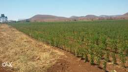 Spectacular Developed Farm land for sale 4Km from Emali Town
