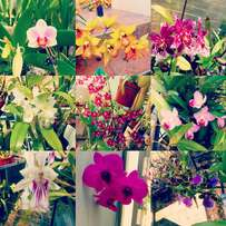 I sell orchids