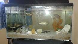 Fish tank with gourami and other fish and all accessories