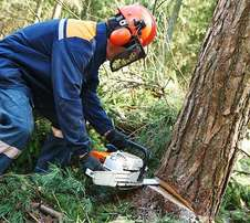 Tree fellers and site clearance