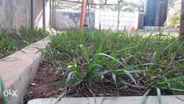 Urban Landscaping Limited