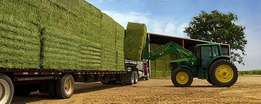 Truck Load Lucerne small square bales Green & leafy