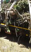 Knowle Tree services- Stumps removal &tree felling in Port Elizabeth
