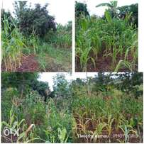 1 acre for sale at Kenol, Thangira. Fronting a season river. 5.6 Kms o
