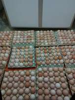 Kienyeji eggs for chicken hatching