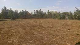 Prime 1/4acre at Mwea red soil