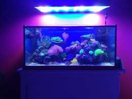 Yellow & Regal Tang, Coral & complete Reef Marine Tank