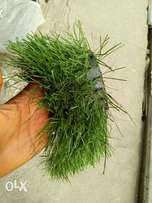 Original Artificial grass 7500 per square meter