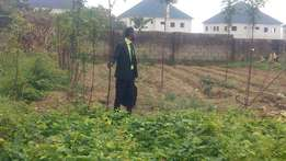 A land measuring 1700sqm by charly boy