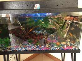 2Foot complete fishtank for sale