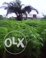 Full plots of land at Arobiayi town of Ota