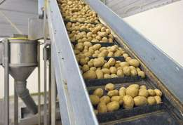 New Crop Fresh Irish Potatoes for Sale At Very Good Prices