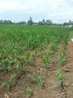 A hundred arable acres for sale in Kiboswa area of Lower Moiben.