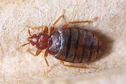 Kill those annoying bedbugs and cockroaches/FUMIGATION