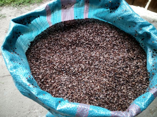 Nietypowy Okaz ŁUSKA GRYKI oczyszczona wypełnienie poduszek szybka wysyłka DU43