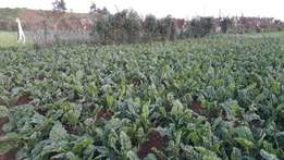 3/4acre for sale Gitogothi Limuru 2km from Tarmac