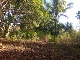 Land for sale kidimu,south coast