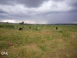 50* 100 Land in Nakuru only 800metres from Mang'u Kabarak tarmac