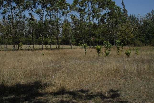 Prime plots for sale in Makuyu phase one Makuyu - image 1