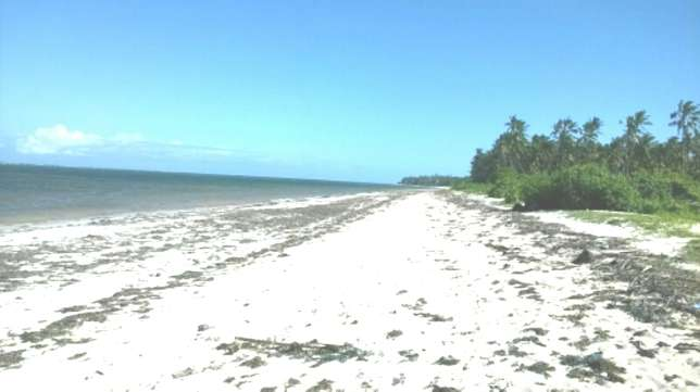 7 Acres Beach Plot For Sale in North Coast Mombasa With Clean Title Kilifi - image 5