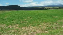 5acres NYERI mukurweini 100 m from tarmac with 4000 trees at 2.5m/acr