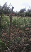 1/4Acre Plot for Sale at Ongata Rongai (Kandisi) in a prime Area