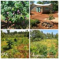 2 acres land for sale at Makuyu, Pundamilia. With a 4 bed roomed house