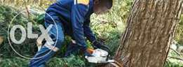 Tree fellings,Stump removal and Garden services