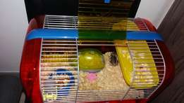 Hamster for sale with accessories