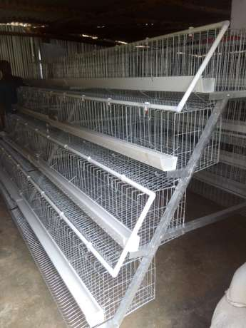 Homestead farm cages.capacity 1000 with free installation. Kasarani - image 3