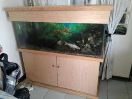 4ft cabinet tank with fish