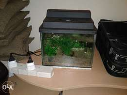 2foot fish tank for sale