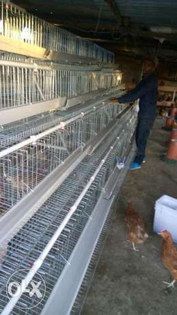 Poultry cages for 990 chicken. Utalii - image 4