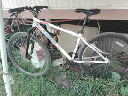 Raleigh 29 inch, 21 speed mountain bicycle