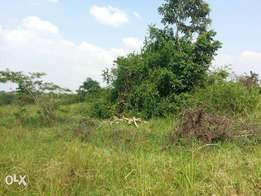 Wondeful 205 acres of private millo on sale in Luweero each at 3m
