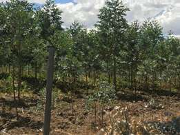 27 acres very fertile land on sale in Olkalou with 20000 trees