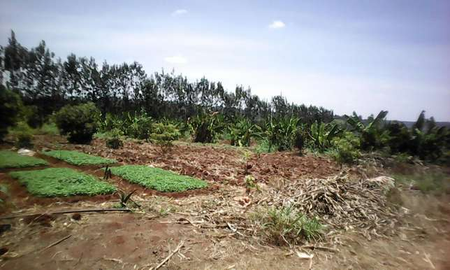 GOLDLEAF Investments 50 by 100 plots in makuyu Thika - image 2