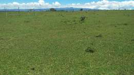 13 acres in Ngobit at 250k per acre