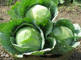 Fresh Cabbages. Within meru county