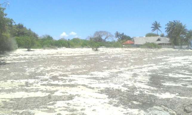 7 Acres Beach Plot For Sale in North Coast Mombasa With Clean Title Kilifi - image 6