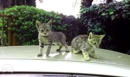 Kittens for sale people!!!