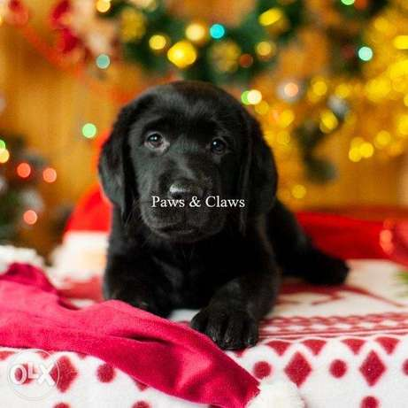 It is offered for sale a beautiful black girl, 3 months old,