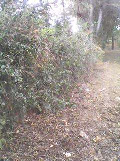Sale of 2 and1/2 acres Rwika junctiom 6km from Embu town Embu Town - image 4