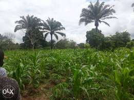 2 plots of land For sale at Rumuodara Portharcout Rivers state