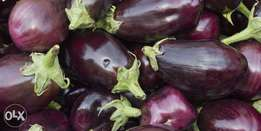 Fresh farm eggplants