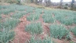 17 acres with tittle deed at 550000 per acre