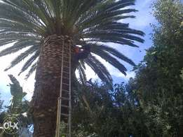 Prof Tree Felling / Removal (Palm Cleaning, Stump Removal)