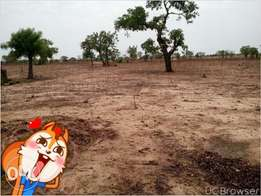 one plot of land with 500 blocks for sale