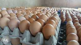 Buy your fresh eggs in large quantities