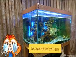 Beautiful fish tank including fish and all accessories